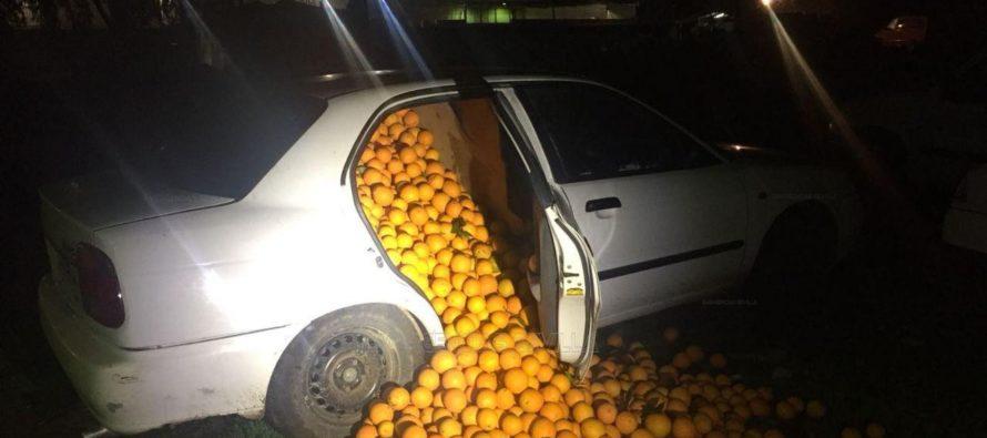 Έκλεψαν 4 τόνους πορτοκάλια και τα φόρτωσαν σε αυτοκίνητα