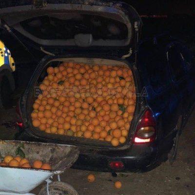 Seville-Police-Stolen-Oranges-4