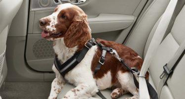 Πώς προστατεύει η Volvo τα κατοικίδια μέσα στο αυτοκίνητο;