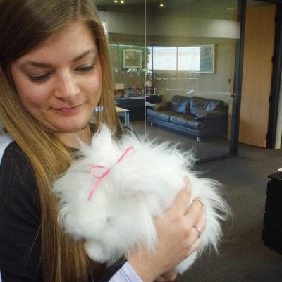 Bunz the Bunny inspires Nissan car designers
