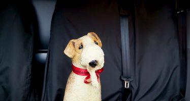Δείτε πως τα σκυλιά λιώνουν από τη ζεστή στο αυτοκίνητο (video)