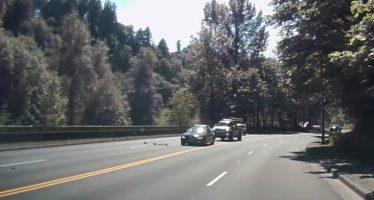 Πάπιες προκάλεσαν τροχαίο ατύχημα (video)