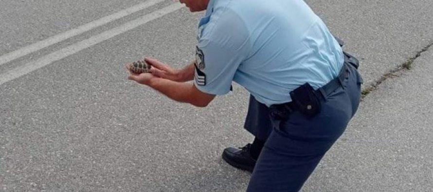 Αστυνομικός απομάκρυνε χελωνάκι από την άσφαλτο