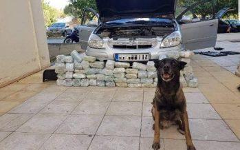 Σκύλος της Αστυνομίας βρήκε κρύπτες ναρκωτικών σε αυτοκίνητο