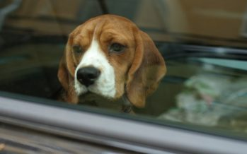 Πρέπει να τιμωρούνται από το νόμο όσοι σπάνε παράθυρο αυτοκινήτου για να σώσουν ένα σκύλο;
