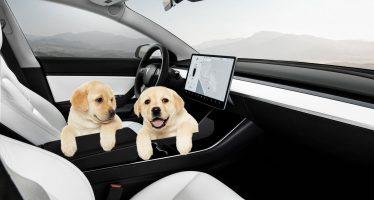 Με κλιματισμό και μουσική μέσα στα Tesla ο σκύλος όταν απουσιάζει ο οδηγός (video)