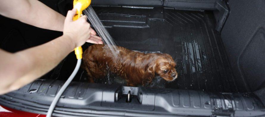 Κάντε μπάνιο το σκύλο σας στο πορτμπαγκάζ του νέου Ford Puma (video)