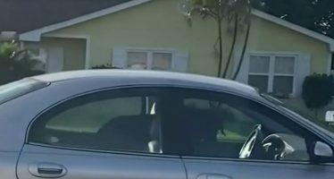 Ο σκύλος που κατάφερε να…οδηγήσει αυτοκίνητο (video)