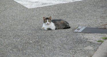 Έκλεβαν οδηγούς αυτοκινήτων με τη βοήθεια μιας γάτας