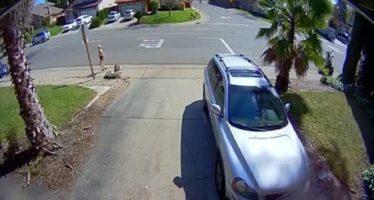 Βγήκε για τζόκινγκ και τη χτύπησε μια BMW (video)